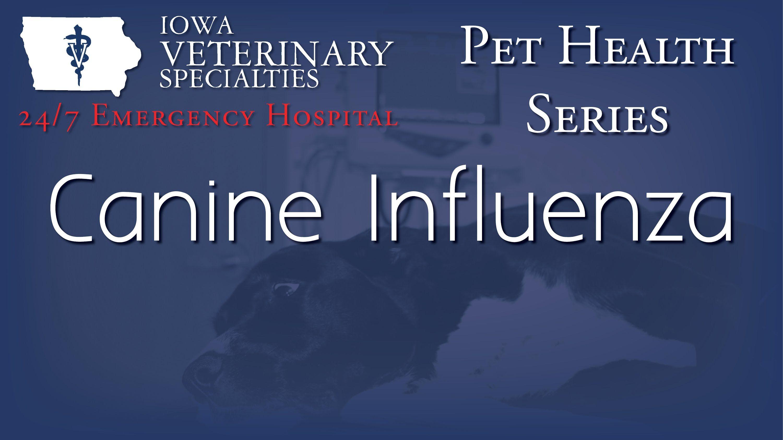 Pin By Iowa Veterinary Specialties On Pet Health Series