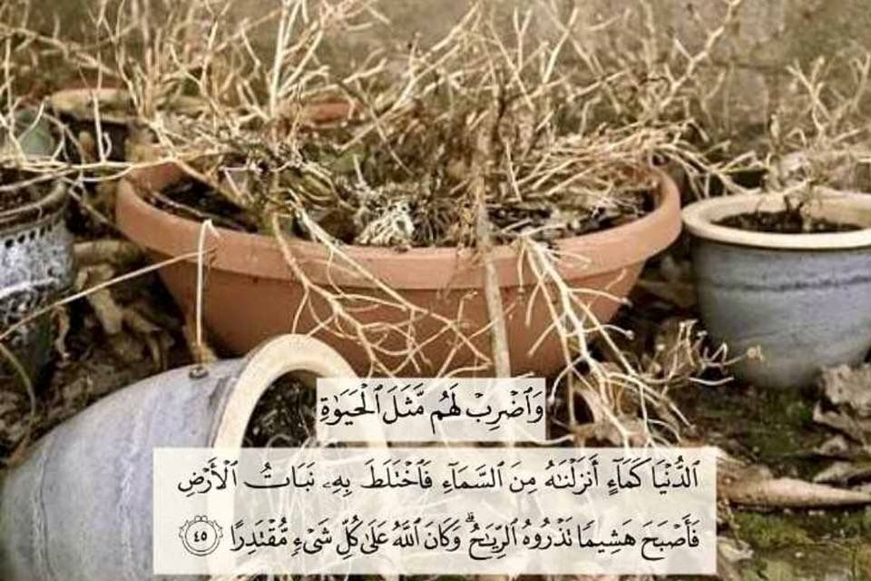 Pin By Mohamed Amin On Quran Verses Quran Verses Quran Verses