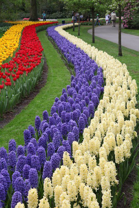 Image result for flowers planted in rows