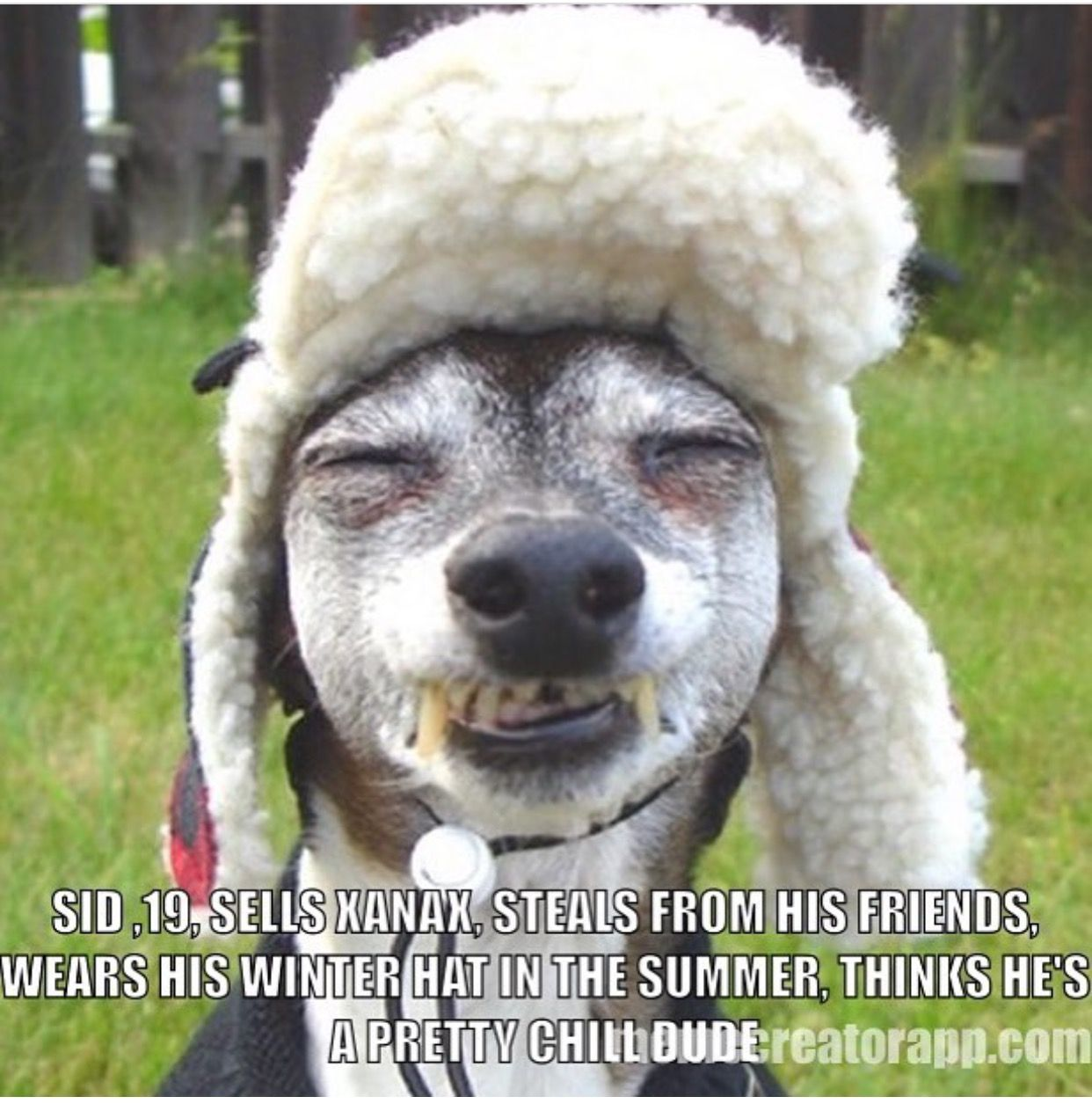 Pin by debbie downing on just funny pinterest dog funny animal