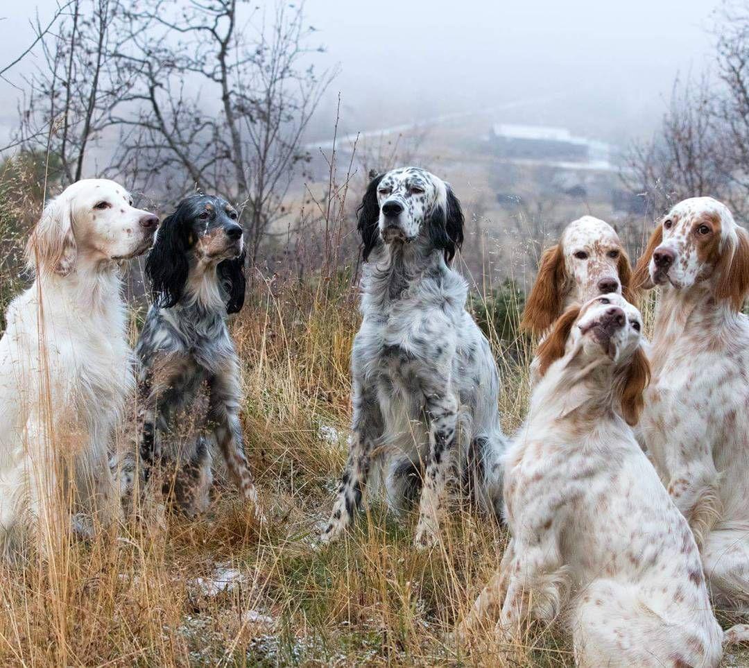 Charm Bracelet - English Setter Bird Dogs by VIDA VIDA VNejN