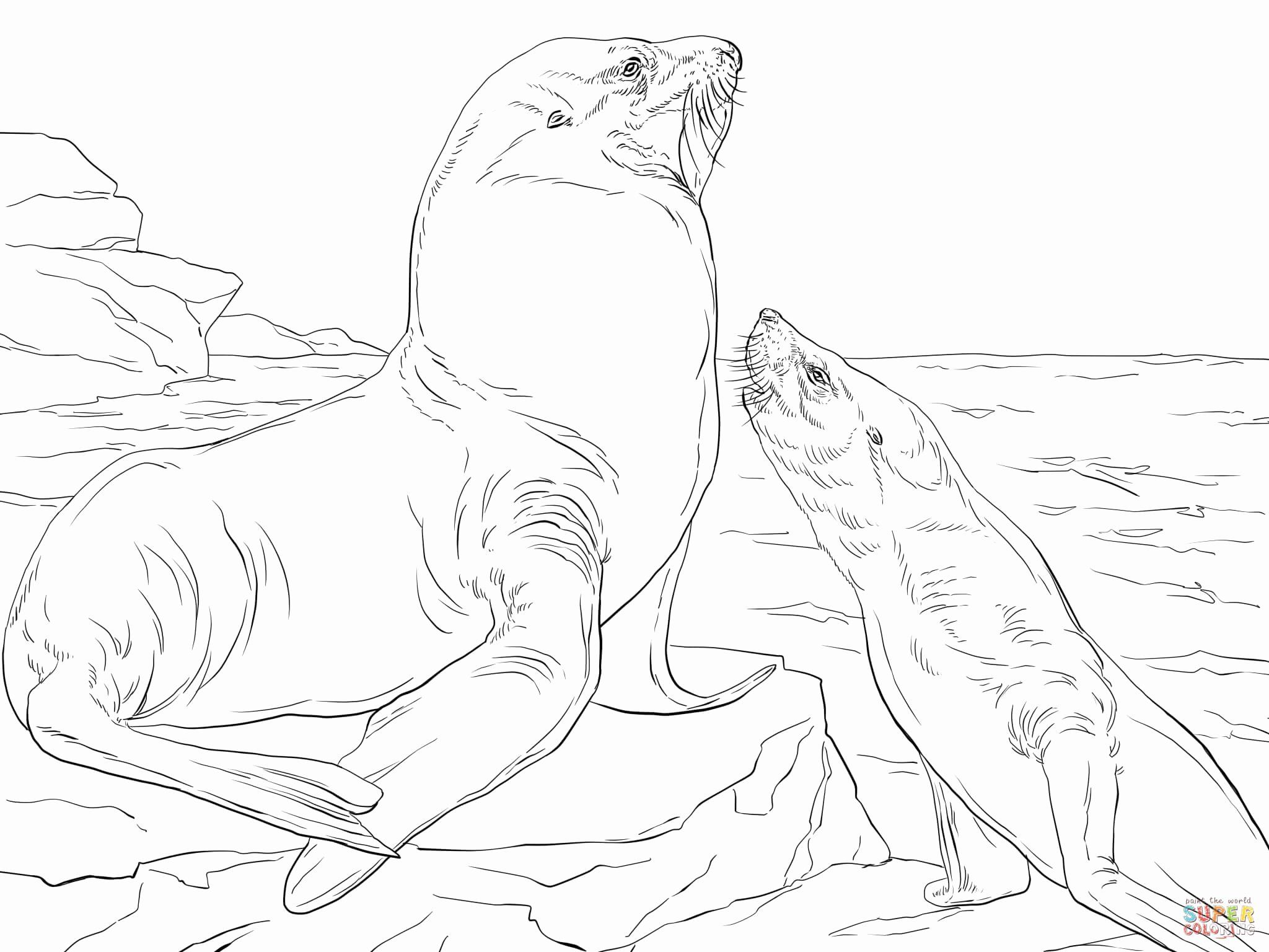 32 Sea Lion Coloring Page In 2020 Lion Coloring Pages Coloring