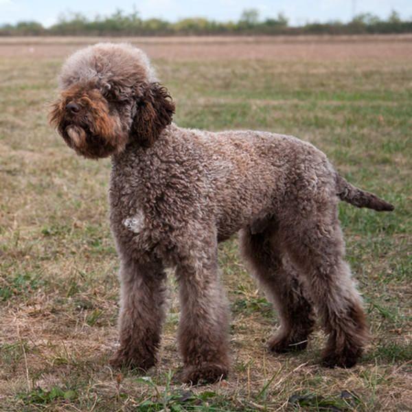 20 Of The World S Rarest Dog Breeds Rare Dog Breeds Rare Dogs Dog Breeds