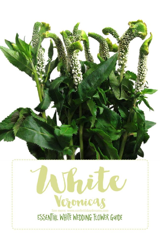 Essential white wedding flower guide names types pics wedding save this awesome in depth white wedding flowers guide for types of white flowers white flowers names and pictures plus season style info mightylinksfo