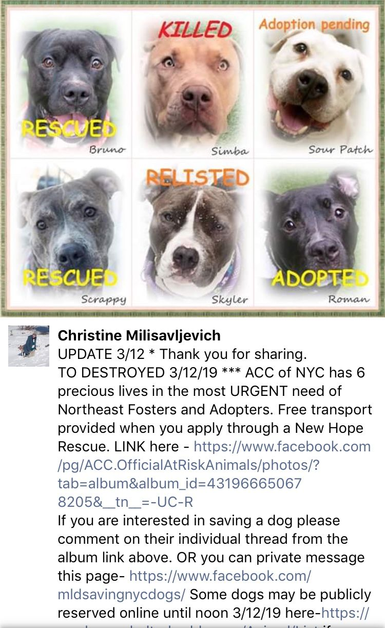 3 12 19 Updates On Today S Kill List At Nyc Acc Rip Simba You