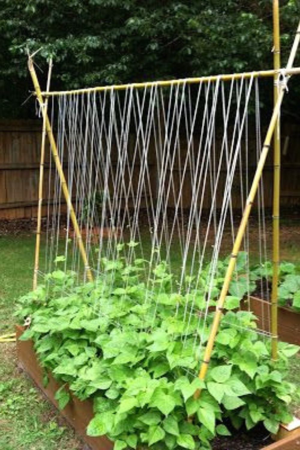 Perfect Trellis Ideas Archway All You Need To Know 773 verticalgardening trellising trellisideas veggiegarden growyourownfood organicfood greenlife freshorganic is part of Vegetable garden -