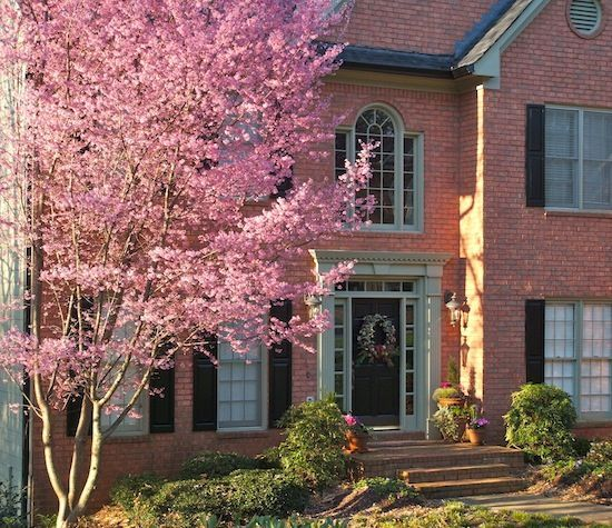 Cherry Blossom Tree Next To House Backyard Oasis Garden Trees Landscape Trees