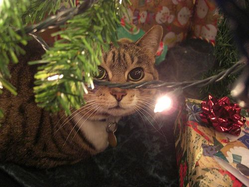 decorate your christmas tree with cats amazing animals - How To Keep Cats Away From Christmas Trees