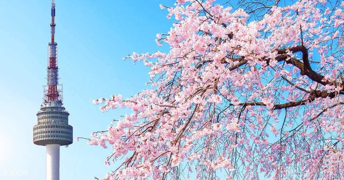 Paling Populer 30 Foto Pemandangan Seoul Korea Selatan Kami Akan Mengumumkan Tarikh Kursus Akan Datang Di Website Ini Akadem Bunga Sakura Gambar Bunga Bunga