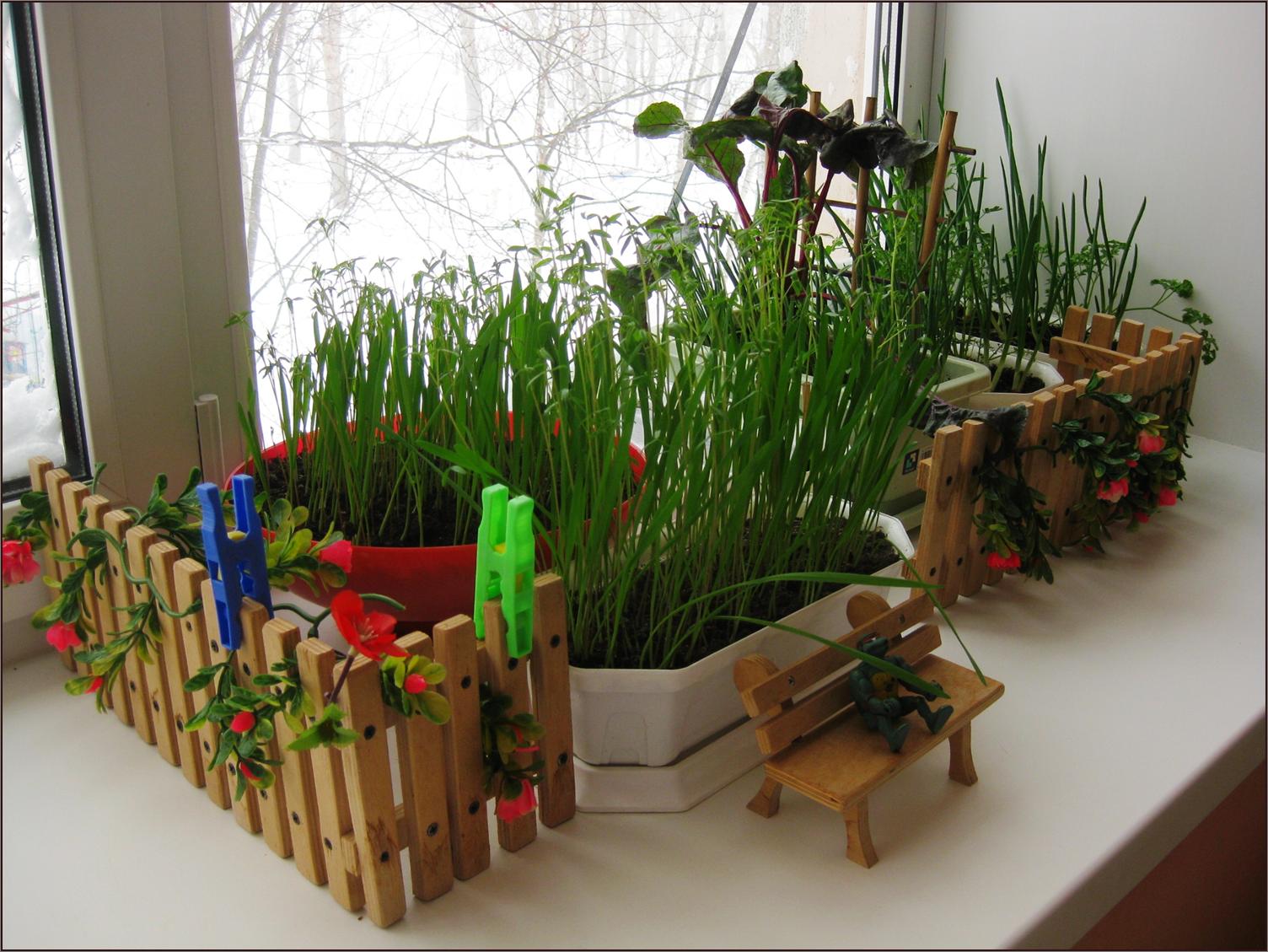 картинки огород на подоконнике воду можно