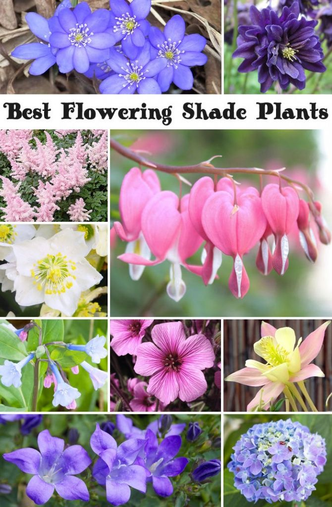 10 Best Flowering Shade Plants With Images Flowering Shade
