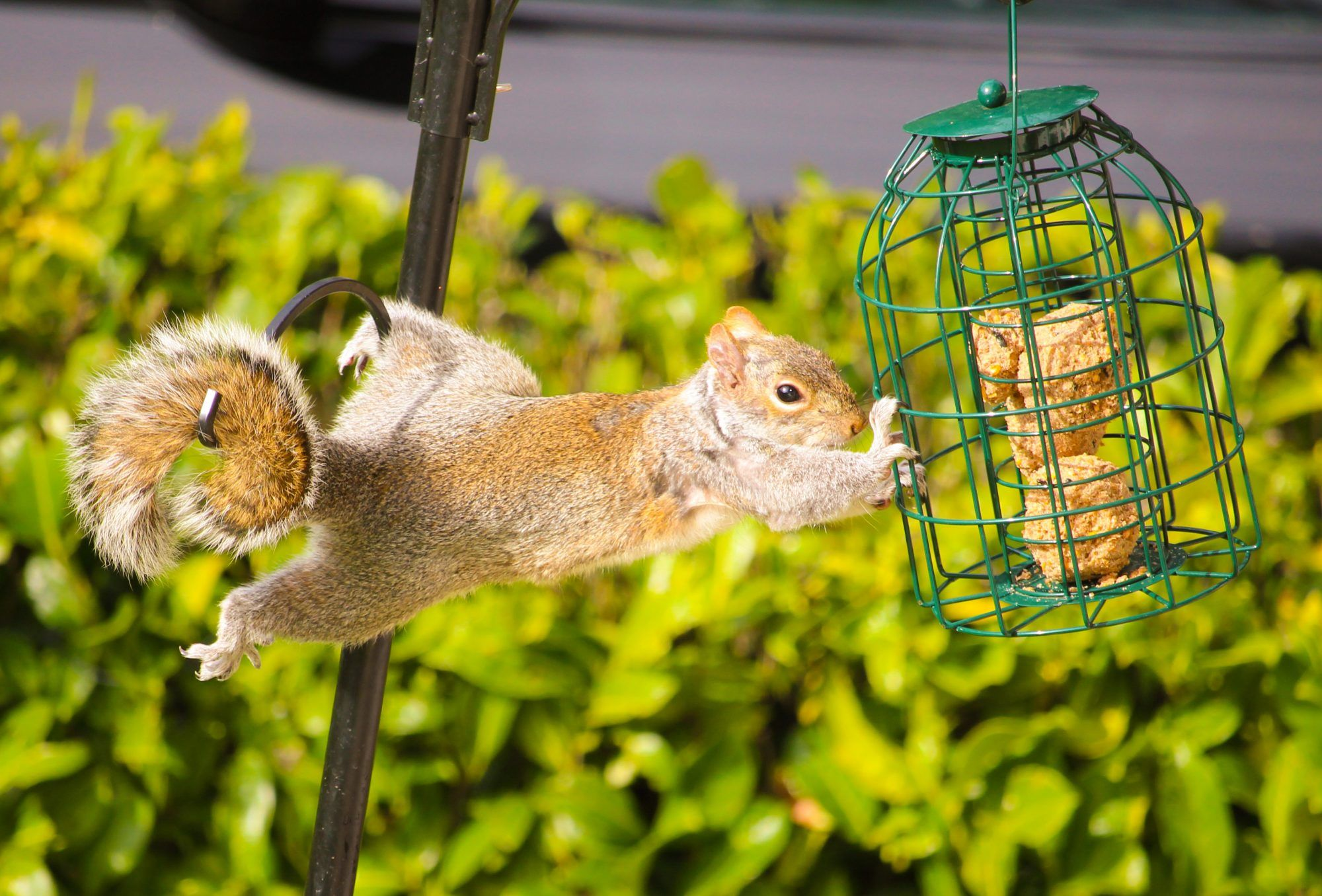 Tips for Keeping Squirrels Out of Your Bird Feeder in 2020