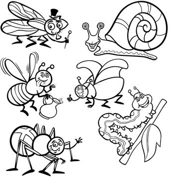 Adaugă Pin Pe Insecte