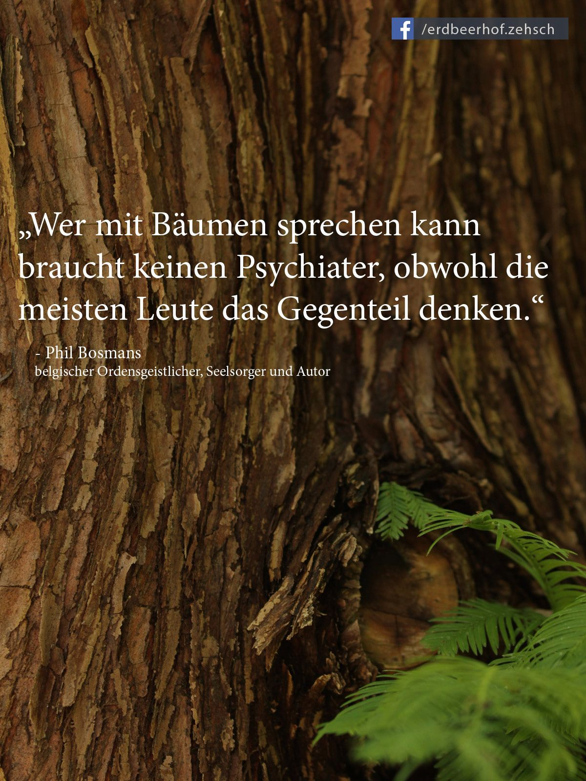 Pin Von Brigitte Lpunkt Auf Sprüche Baum Zitate Zitate