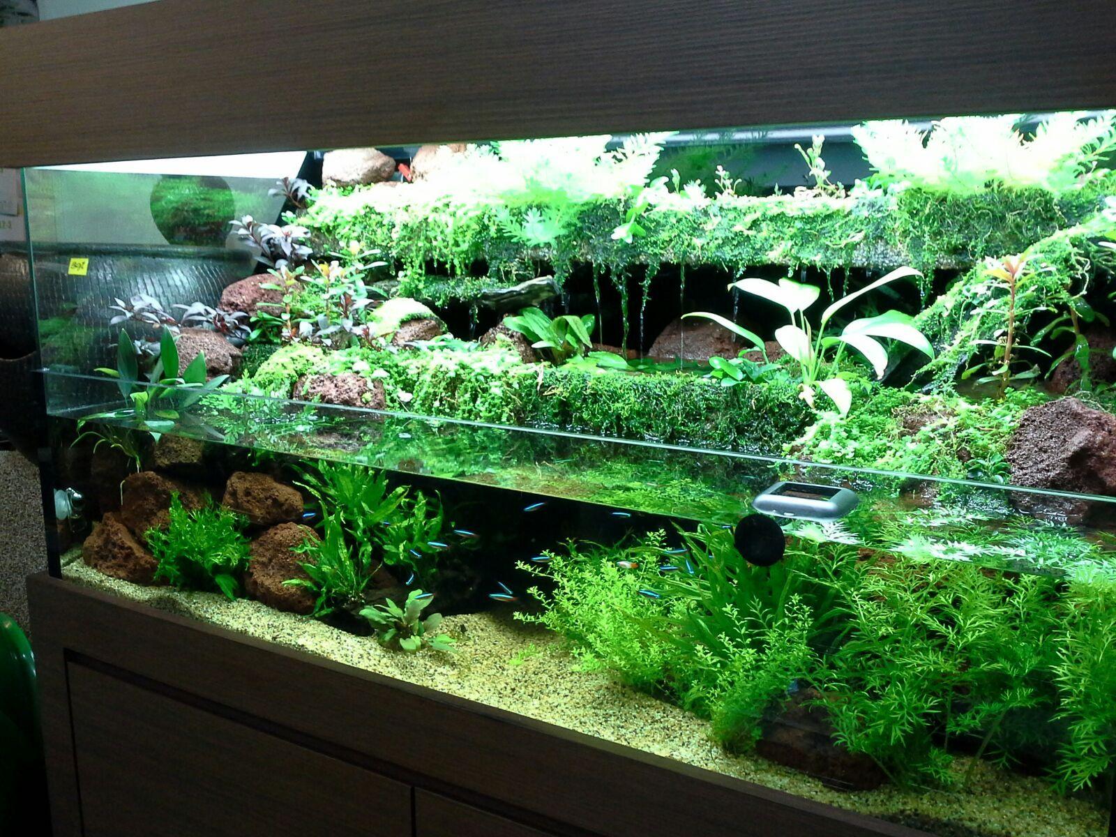 pin by aquafishtanks on paludarium pinterest aquarium terrarium