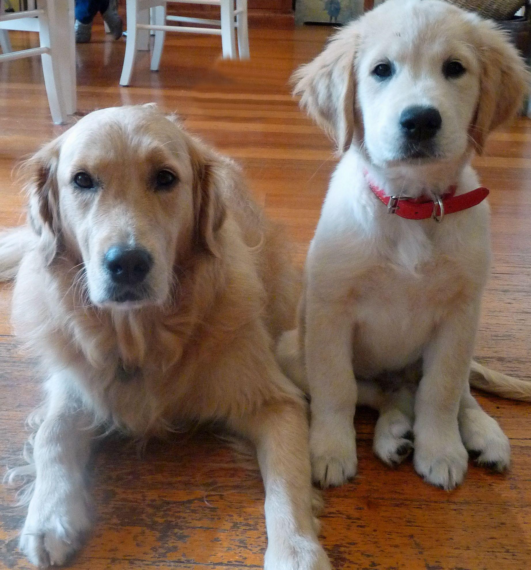 Riley & Cooper Vija Anton Custom pet memorials, Happy