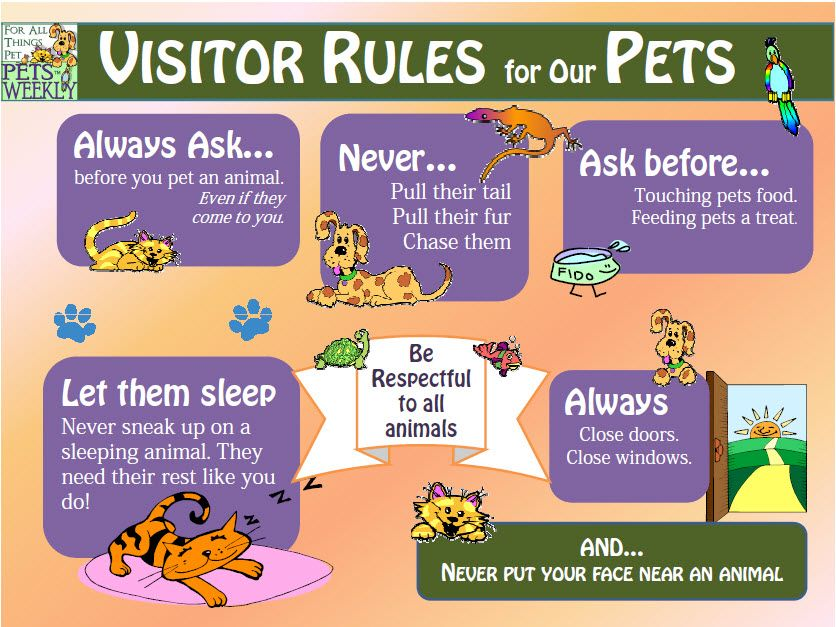 Summertime Safety with Kids and Pets Really good tips