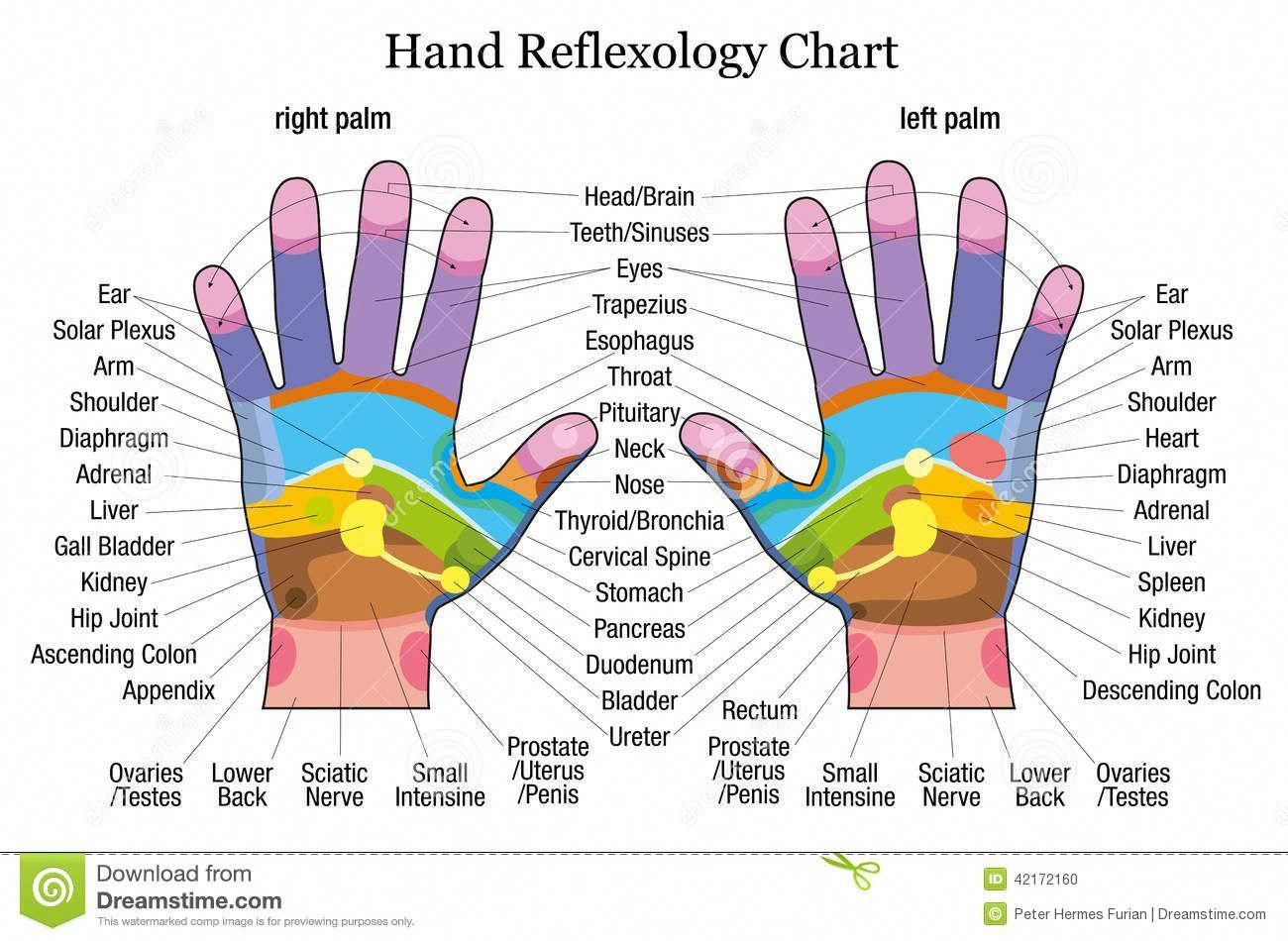 pain relief in the palm of your hands with this fast easy rh pinterest com physiology diagrams torso massage diagrams [ 1300 x 950 Pixel ]
