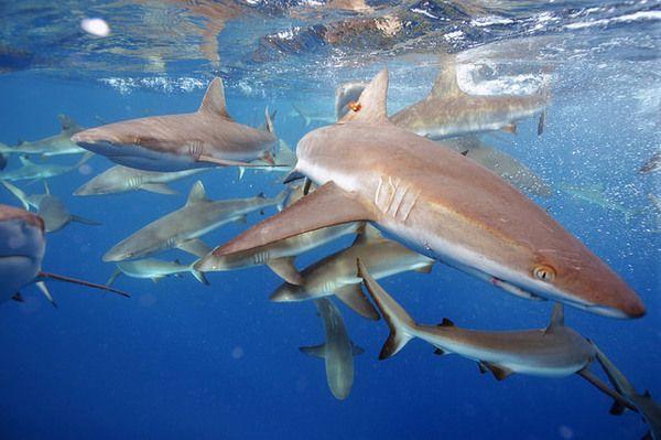 Florida Man Fends Ten Sharks Off With Fishing Pole https://plus.google.com/+KevinGreenFixedOpsGenius/posts/PNpaJiNTYFg