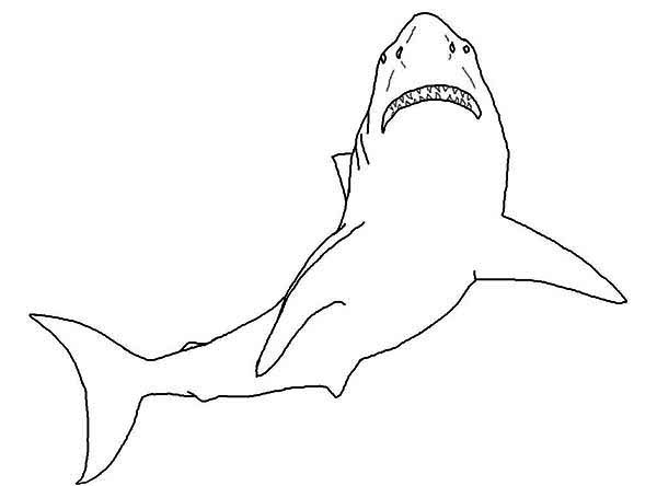A Simple Drawing Of Great White Shark Coloring Page Kids Play Color In 2020 Shark Coloring Pages Great White Shark Drawing Shark Drawing