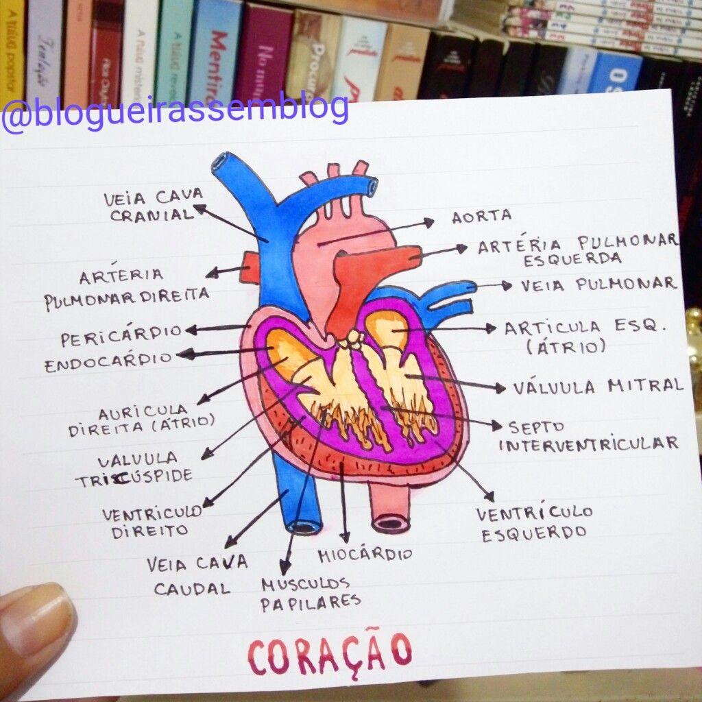 Sistema Circulatorio Coração