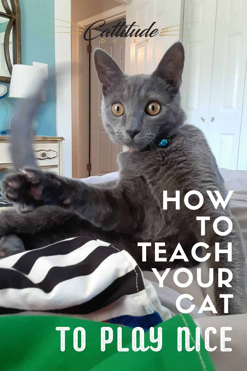 How To Teach Your Cat To Play Nice In 2020 Cat Exercise Cats Cat Behavior