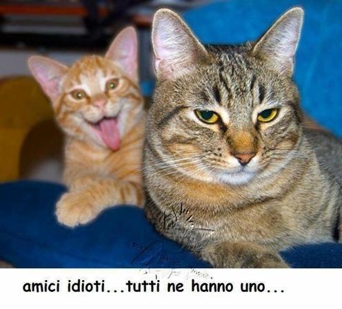 gatti divertenti - Cerca con Google