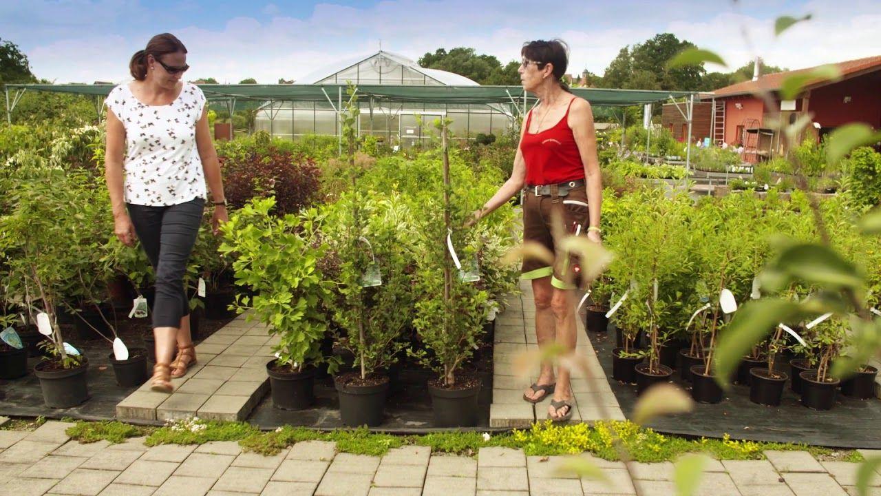 Kroners Gartenwelt In Oberthulba Mehr Informationen Www Kroeners Gartenwelt De Oberthulba Gartenfreund Krea Gartenwelt Gartenpflanzen Landschaftsbau