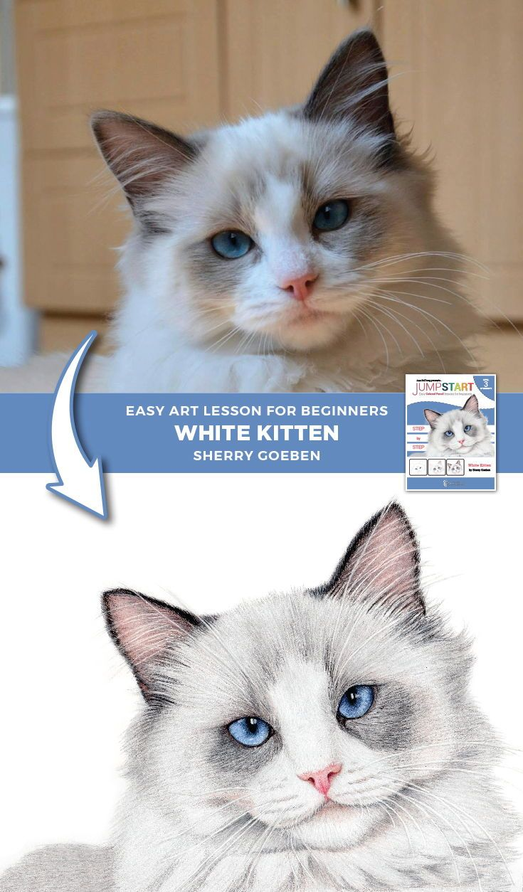 Jumpstart Level 3 White Kitten Colored pencil lessons
