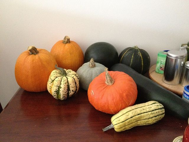 sugar pumpkins and asst. squash