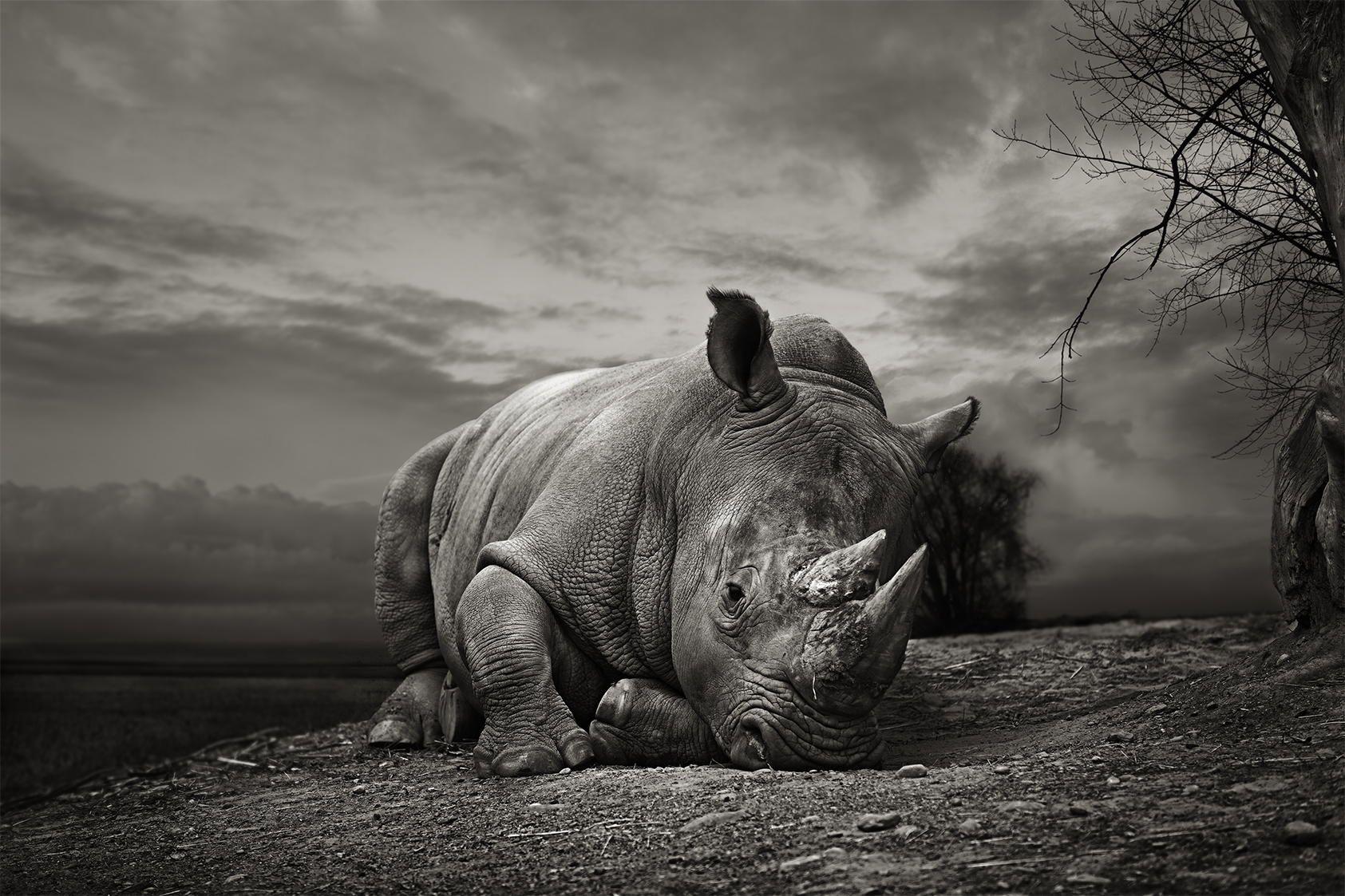 Rsultats de recherche dimages pour rhinoceros charge