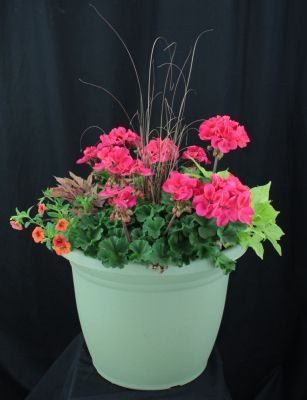 Lowes Large Mixed Annual Planter With Images Lowe S Garden