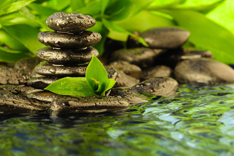Zen Nature Pictures 399 Pix Wallpaper Foresthdwallpaper