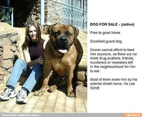 Dog For Sale Ho Lee Shit Huge Dogs Guard Dogs For Sale Giant Dogs