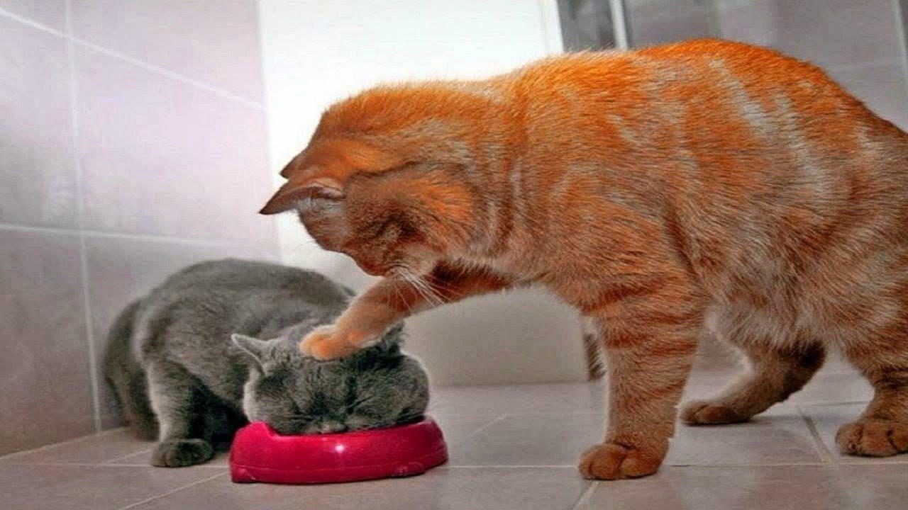 Kucing Lucu Dan Menggemaskan Cute Cat Compilation Humor Hewan Kucing Betina Humor Kucing