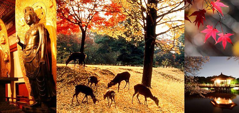 Nara Tourism Statistics Week