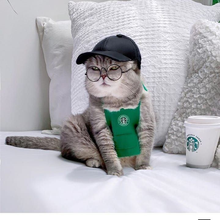 Coffee, anyone?  #cat #cats #catstagram #catlover #catfunny #cats_of_day #catinstagram #catlove #catlife #catsofig #meow #pets #petsofinstagram #petlovers #animal #animallovers #funny #cute #love #coffee