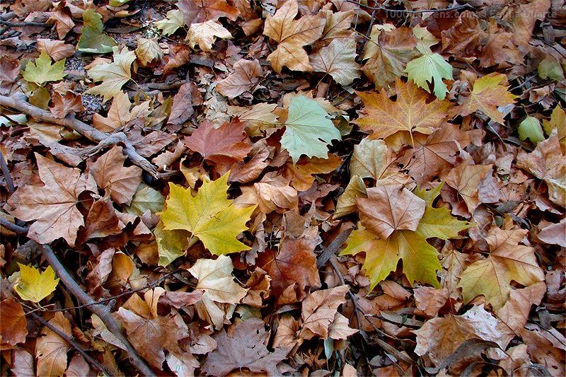'Outono em despedida....', de Emília Duarte