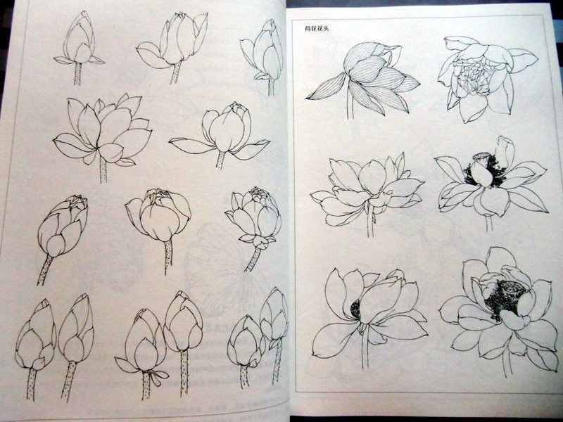 Japanese Flower Line Drawing : How to draw a lotus flower google search