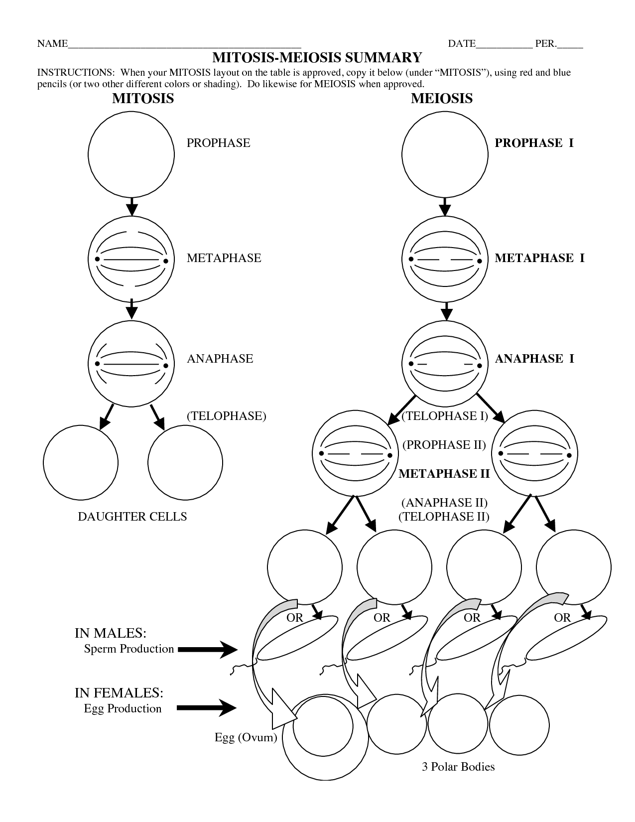 Image result for meiosis stages worksheet Meiosis