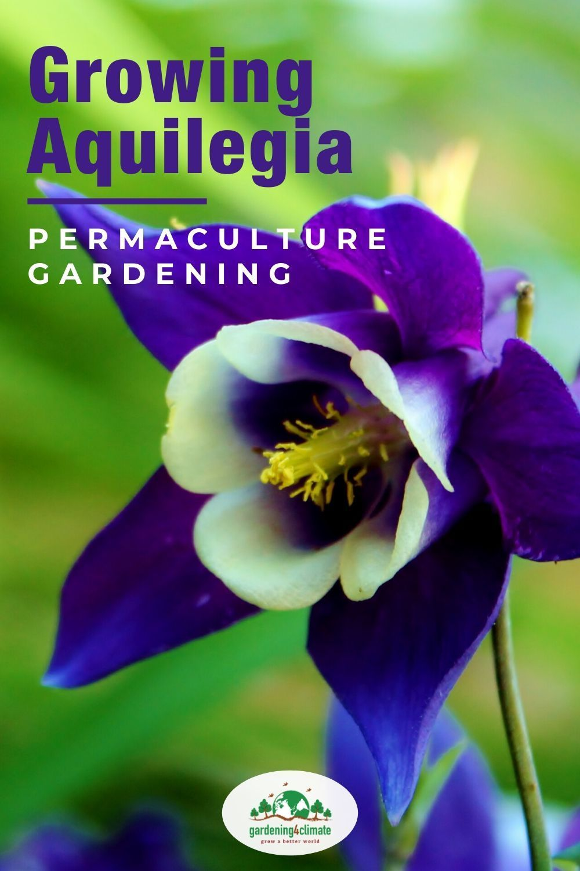 Pin On Easy Flower Gardening Ideas