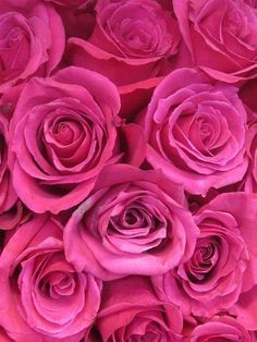 Hot Pink Flowers Tumblr Pink Roses Thinkpink Pink Roses With