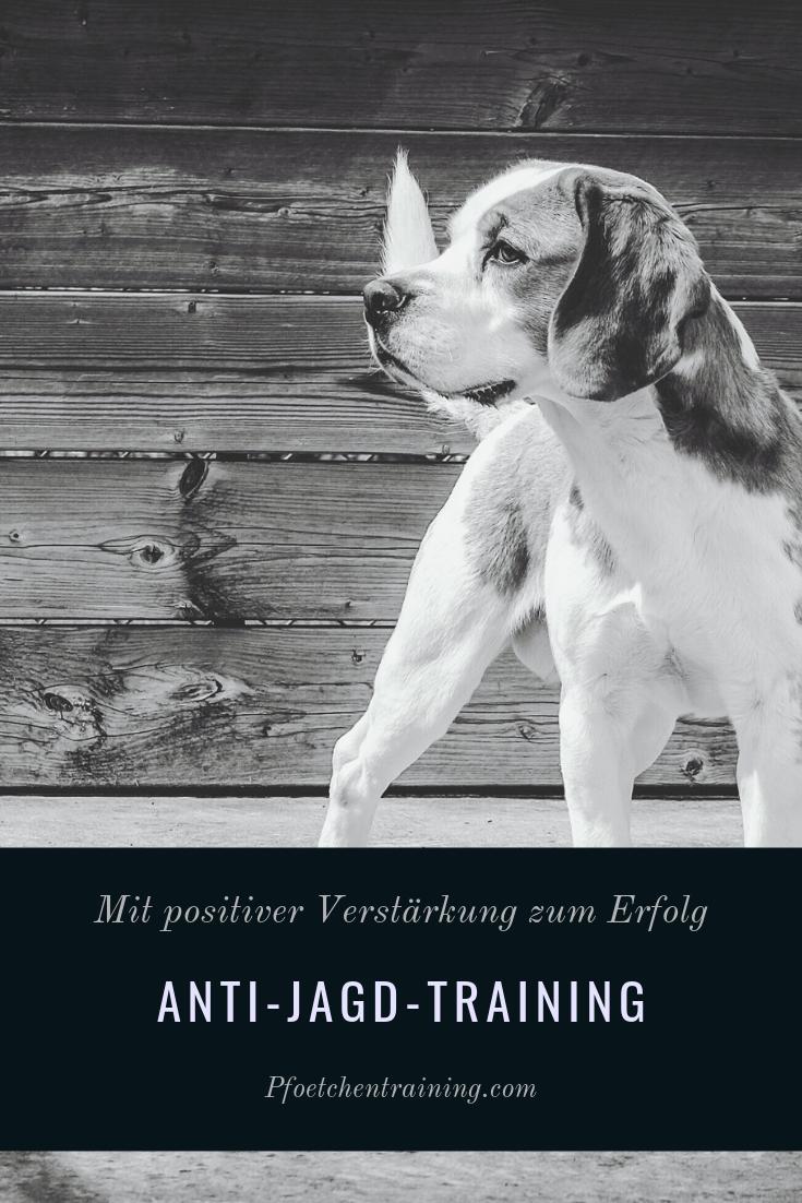 populärer Stil Auschecken mäßiger Preis Anti-Jagd-Training ohne Zwang? Das geht! - | Dogs ...