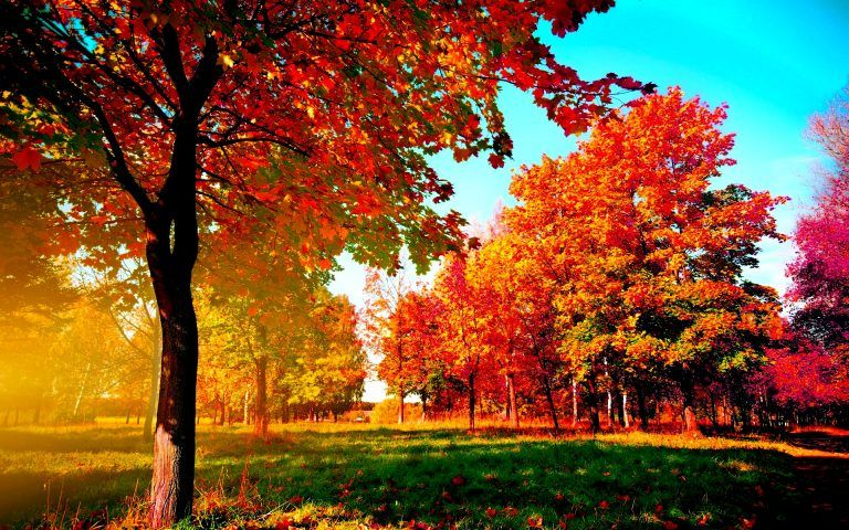Autumn Trees Wide Desktop Background Desktop Wallpaper Fall Fall Wallpaper Tree Wallpaper
