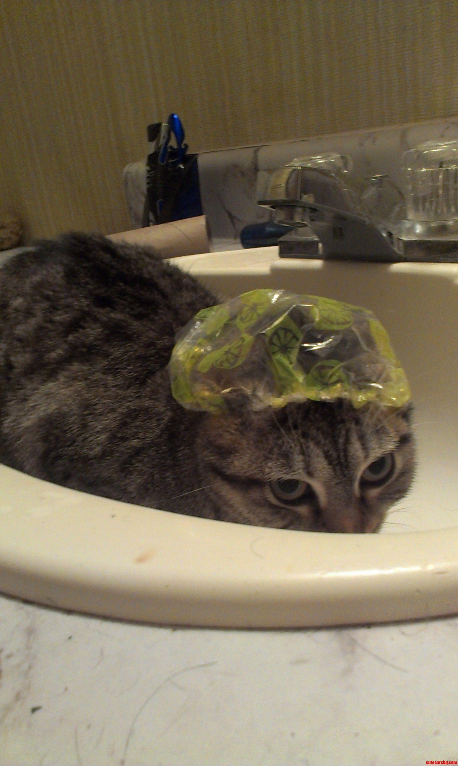 Bath Time Cute cats, Cat bath, Cats