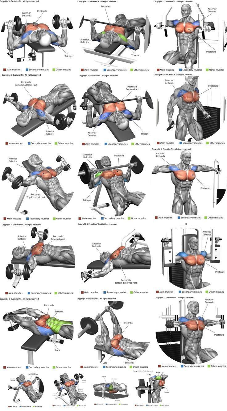 how to build chest muscle mass