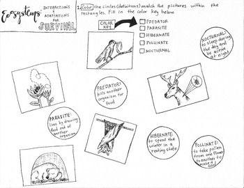 Ecosystem Interactions and Adaptations coloring sheet