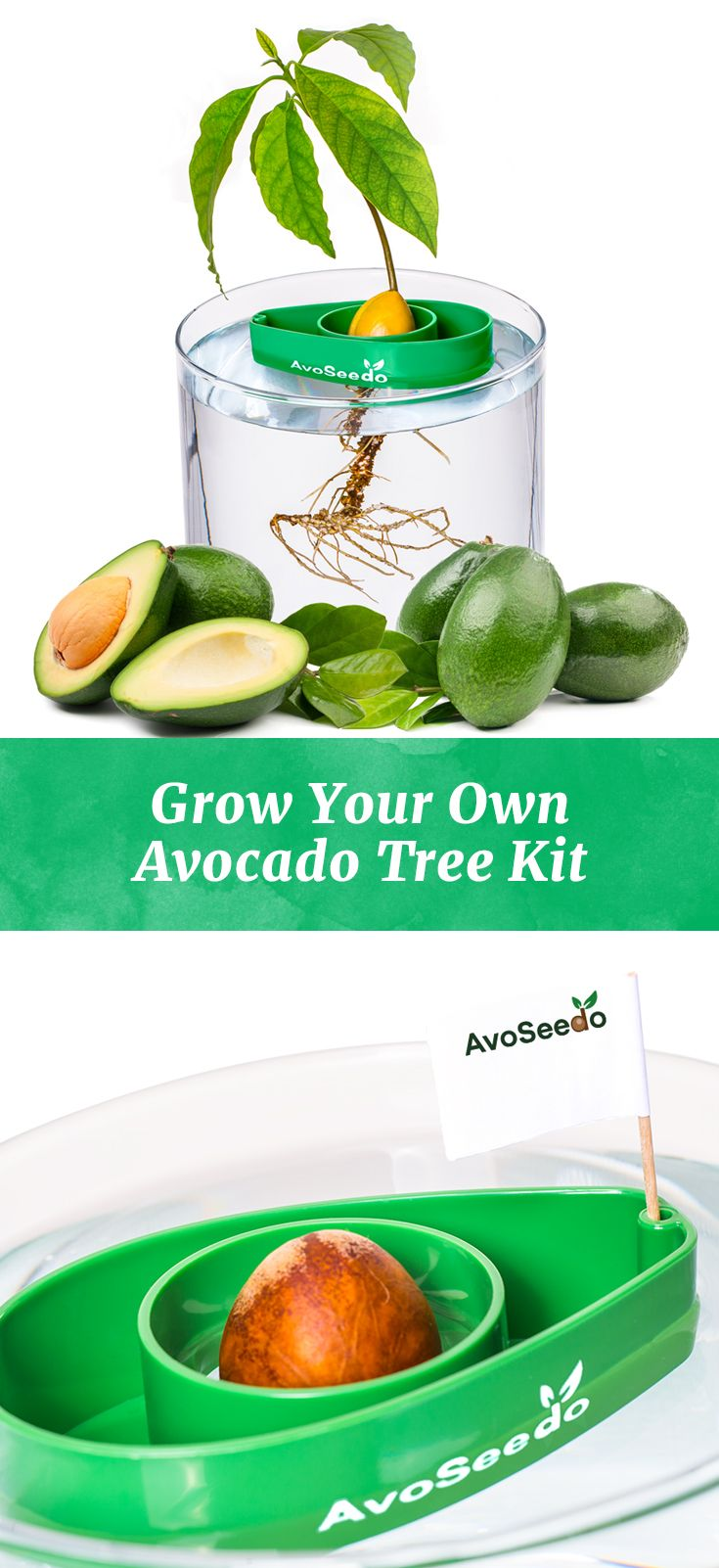 Tuinieren Set Avocado Tree Starter Kit Set Of 3 Tuin Garden Tuin Patio