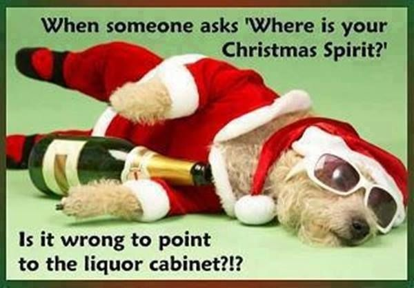 Christmas Spirit Funny Puppy Funny Quotes Humor Christmas