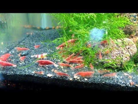 Pin On Aquarium Fish And Setup